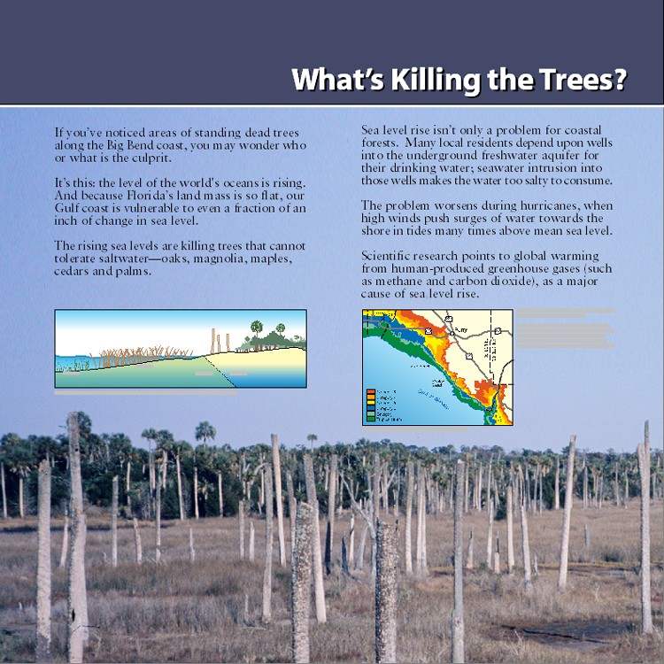whats killing the fish What started as reports of a fish kill of a few hundred last week in brevard county in sykes creek, turned into thousands of a multi-species kill in the indian river lagoon in the banana river.